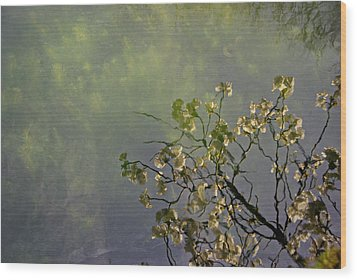 Wood Print featuring the photograph Blossom Reflection by Marilyn Wilson