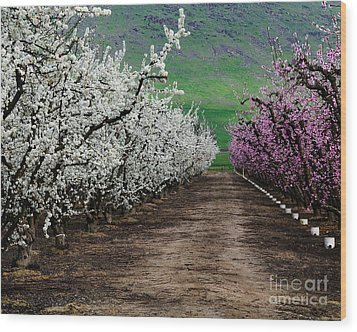 Blossom Standoff Wood Print by Terry Garvin