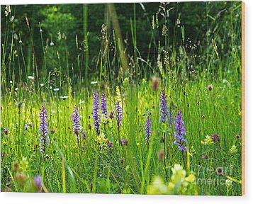 Wood Print featuring the photograph Blossom Summer Meadow by Kennerth and Birgitta Kullman