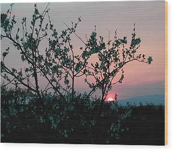 Blossom Sunset Wood Print by Dorothy Berry-Lound