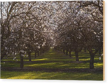 Blossom Tunnel  Wood Print