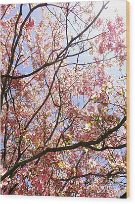 Blossoming Pink Wood Print by Robyn King