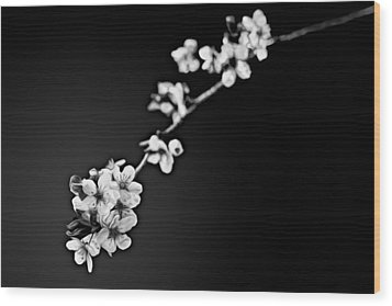 Wood Print featuring the photograph Blossoms In Black And White by Joshua Minso