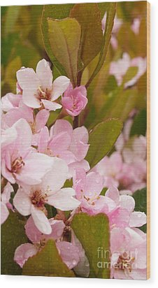 Blossoms Of The Rain Wood Print