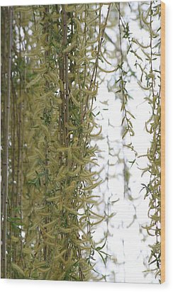 Blossoms Of The Willow 1 Wood Print by Jennifer E Doll
