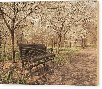 Blossoms  Wood Print by Scott Rackers
