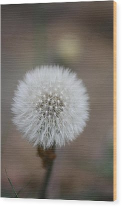 Blow Ball  Wood Print by Daniel Precht