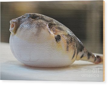Wood Print featuring the photograph Blowfish 2 by Cynthia Snyder