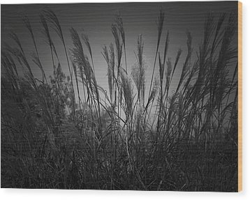 Wood Print featuring the photograph Blowin by Debra Crank