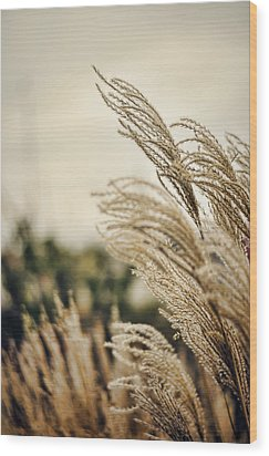 Blowing In The Wind Wood Print by Heather Applegate
