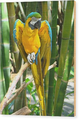 Wood Print featuring the photograph Blue And Gold Macaw by Phyllis Beiser