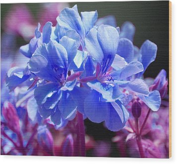 Blue And Purple Flowers Wood Print by Matt Harang