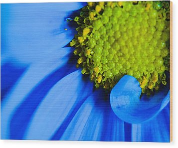 Wood Print featuring the photograph Blue And Yellow by Erin Kohlenberg