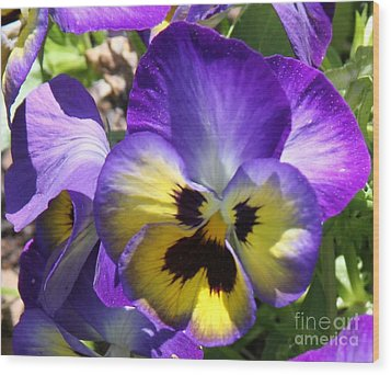 Blue And Yellow Pansies Wood Print by Cathy Lindsey