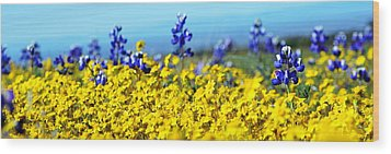 Blue And Yellow Wildflowers Wood Print by Holly Blunkall