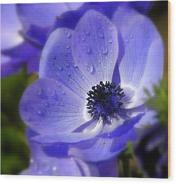 Blue Anemone Wood Print by Martina  Rathgens