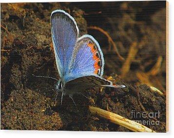 Blue Angel Wood Print by Janice Westerberg