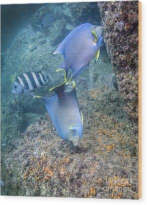 Blue Angelfish Feeding On Coral Wood Print by Michael Wood
