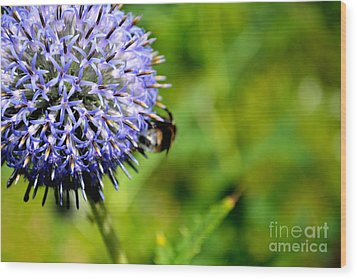 Wood Print featuring the photograph Blue Ball Flower by Scott Lyons