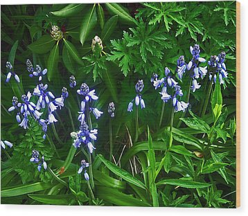 Blue Bells Wood Print by Aimee L Maher Photography and Art Visit ALMGallerydotcom