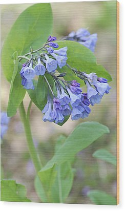 Wood Print featuring the photograph Blue Bells Of Lapsley's Run by Phyllis Peterson