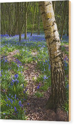 Blue Bells Path Wood Print by Svetlana Sewell