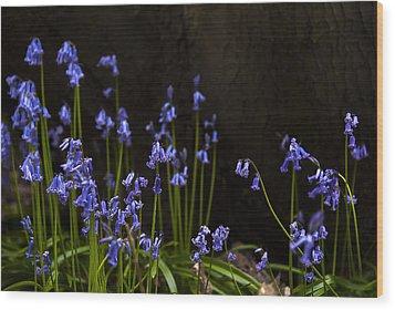 Blue Bells Wood Print by Svetlana Sewell
