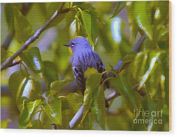 Blue Bird With A Yellow Throat Wood Print by Jeff Swan
