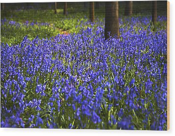 Blue Blue Bells Wood Print by Svetlana Sewell
