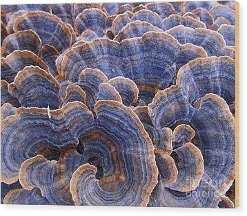 Blue Bracket Macro Wood Print