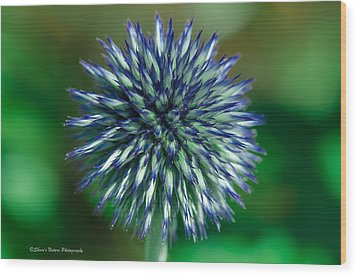 Blue Burst Wood Print by Sheen Watkins