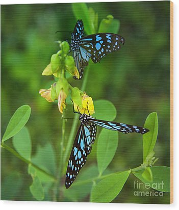 Blue Butterflies In The Green Garden Wood Print by Regina Koch