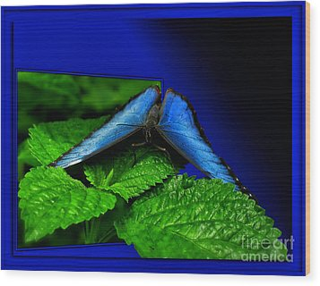 Blue Butterfly 02 Wood Print by Thomas Woolworth