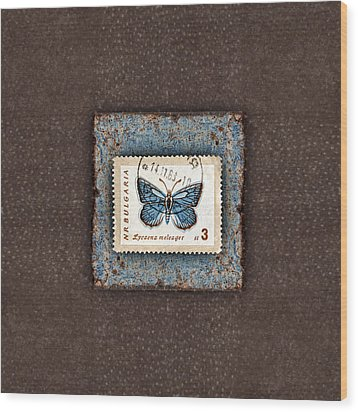 Blue Butterfly On Copper Wood Print