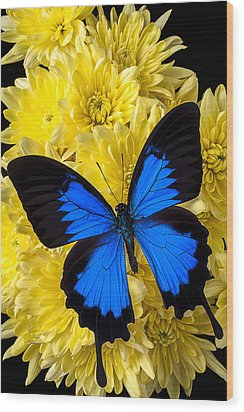 Blue Butterfly On Poms Wood Print by Garry Gay