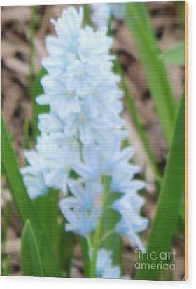 Blue Cone Flower Wood Print