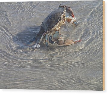 Wood Print featuring the photograph Blue Crab Chillin by Robert Nickologianis