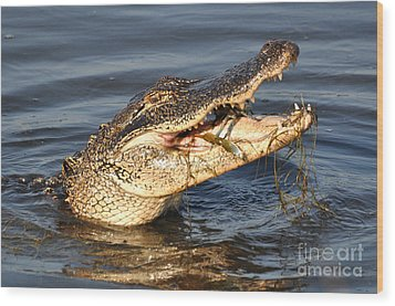 Wood Print featuring the photograph Blue Crab Tar-tar by Kathy Baccari