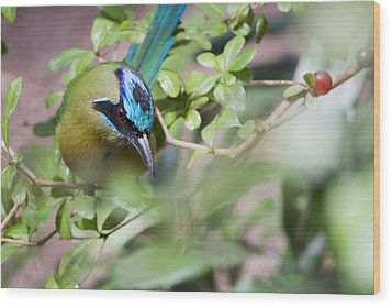 Wood Print featuring the photograph Blue-crowned Motmot by Rebecca Sherman