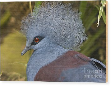 Wood Print featuring the photograph Blue-crowned Pigeon by David Millenheft