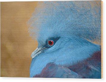Blue Crowned Pigeon Wood Print by T C Brown