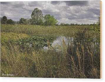 Blue Cypress Wetlands Wood Print