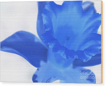 Wood Print featuring the photograph Blue Daffodil by Andy Prendy