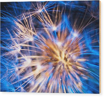 Blue Dandelion Up Close Wood Print