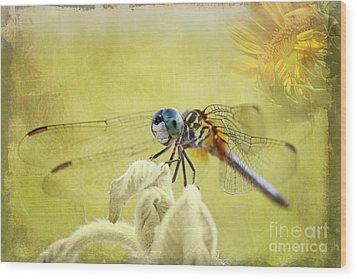 Blue Dasher Wood Print by Pamela Gail Torres
