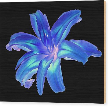 Blue Day Lily #2 Wood Print