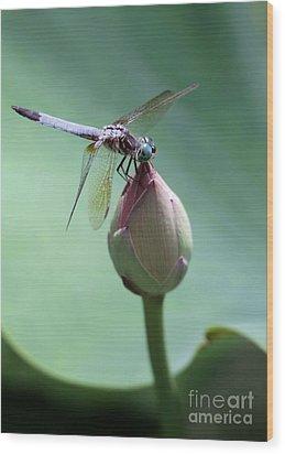 Blue Dragonflies Love Lotus Buds Wood Print