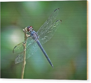 Wood Print featuring the photograph Blue Dragonfly by Linda Brown