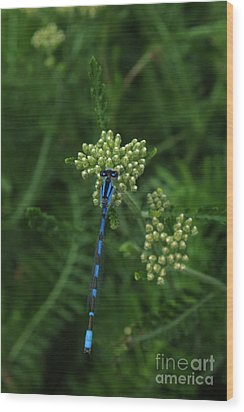 Wood Print featuring the photograph Blue Dragonfly by Marjorie Imbeau