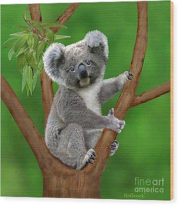 Blue-eyed Baby Koala Wood Print by Glenn Holbrook